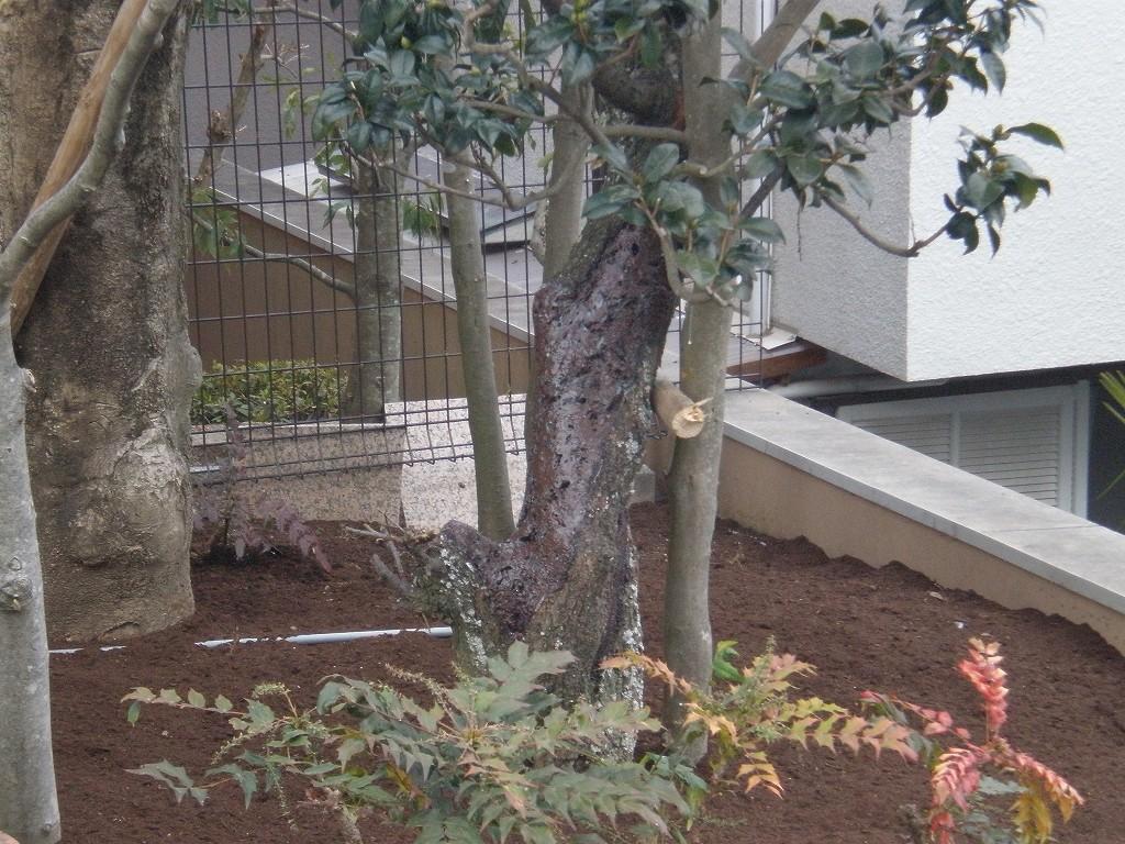 〈保護〉樹木保護 [after]