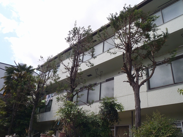 (管理)数年間放置した樹木の剪定 [after]
