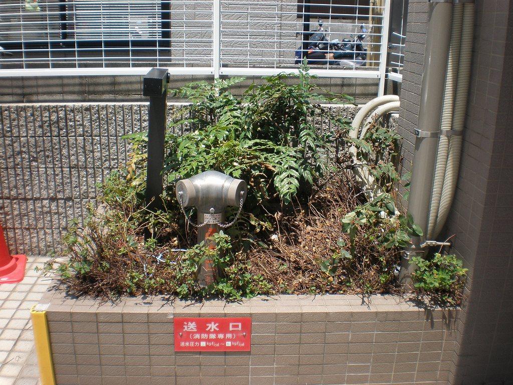 〈植栽〉改修工事で傷んだ植木を・・・ [before]